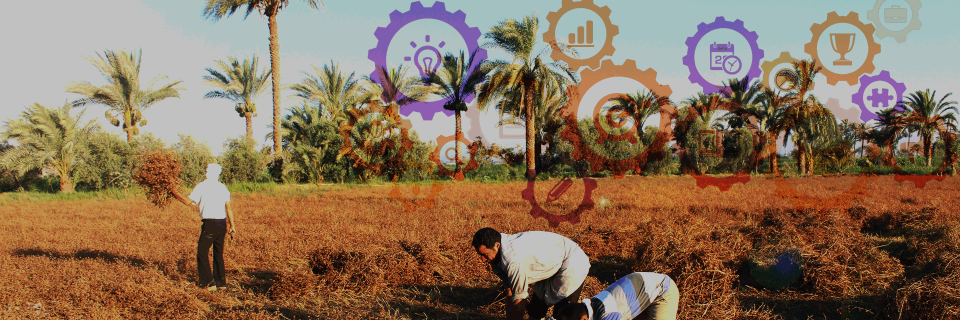 A Cloud-based Complaints Management and Decision Support System for Sustainable Farming in Egypt